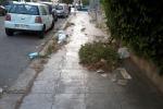 Palermo tra le erbacce, e i rifiuti germogliano nelle aiuole di viale Regione