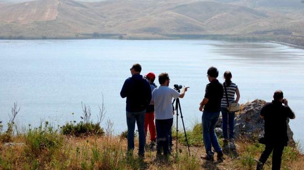 birdwatching, escursione, lago, Sicilia, Società, Tempo libero