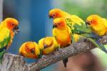 Pappagalli tropicali colorano il centro storico di Palermo