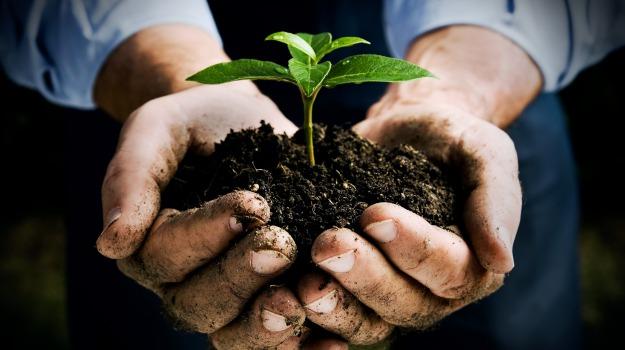 Imprese agricoltura in Sicilia, Sicilia, Economia