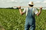 Lavoro, cresce nel 2015 l'occupazione nel settore agricolo
