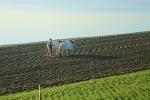Scoperti 14 lavoratori in nero tra Caltagirone, Granieri e Licodia Eubea