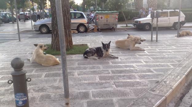 cani, noto, randagi, Siracusa, Cronaca