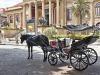 Palermo, carrozze e calessi vietati nei giorni caldi: nuova ordinanza a tutela dei cavalli