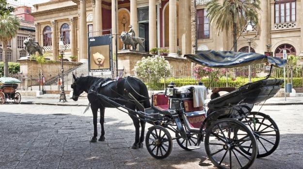 carrozze, comune, regolamento, Palermo, Politica
