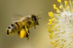 Il miele siciliano buono e sicuro: i risultati di una ricerca
