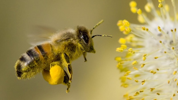 AGRICOLTURA, Miele, pesticidi, Sicilia, Economia
