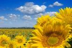 Settembre 2014 il più caldo mai registrato dal 1880