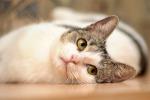 Spariti 150 gatti in due anni a Parma, e ora gli animalisti mettono una taglia