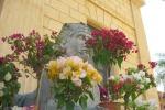 Piante rare e orchidee, una rassegna all'Orto botanico di Palermo