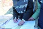 Ragusa, venti invitati intossicati al banchetto nuziale: gli antipasti sotto accusa