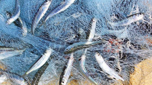 armatori, fermo biologico, Mazara del Vallo, pesca, Trapani, Economia