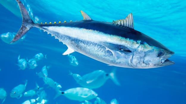 favignana, pesca, quota, tonno, Trapani, Economia