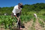 Scoperti 33 lavoratori in nero nelle campagne ragusane