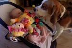 """Cane """"si scusa"""" per aver rubato i giocattoli alla sua padroncina: il video"""