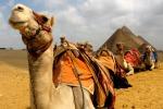 """Cammelli e dromedari """"re"""" del deserto? Ecco i geni che lo dimostrano"""