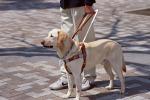L'appello dell'Unione Ciechi: accogliete i cani guida nei luoghi pubblici