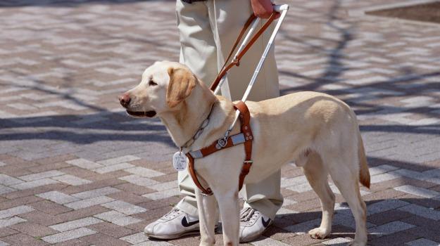 aiuto, animale, cane, cieco, guida, Sicilia, Società