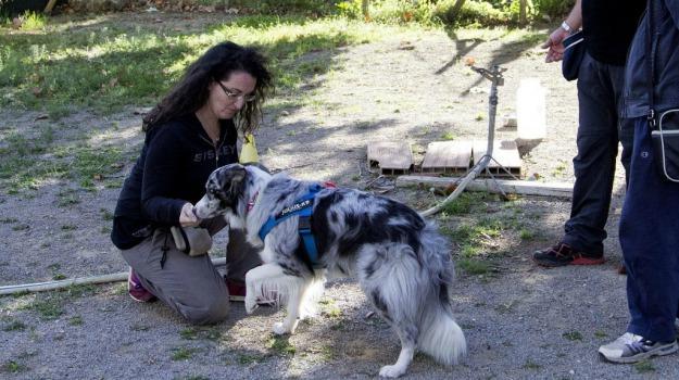 animali, cane, corso, Sicilia, Palermo, Vita