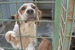 Vitalizio di 500 euro a chi adotta un cucciolo Iniziativa del Comune di San Giovanni La Punta