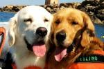 Microchip ai cani, servizio gratuito in piazza a Catania