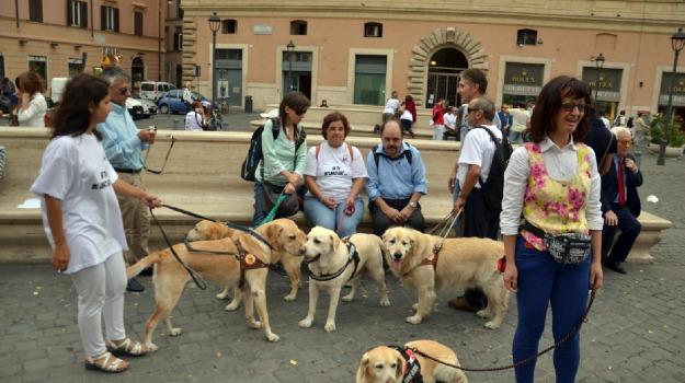 cani, ciechi, guida, manifestazione, sfilata, Laura Boldrini, Mario Barbuto, Sicilia, Archivio