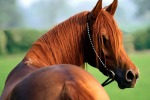 Suona la carica per l'equiturismo, cavalli protagonisti alla fiera di Verona
