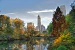 New York, cucciolo di orso trovato morto a Central Park