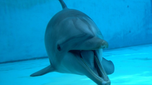 compleanno, delfino, evento, festa, orsi, Sicilia, Società