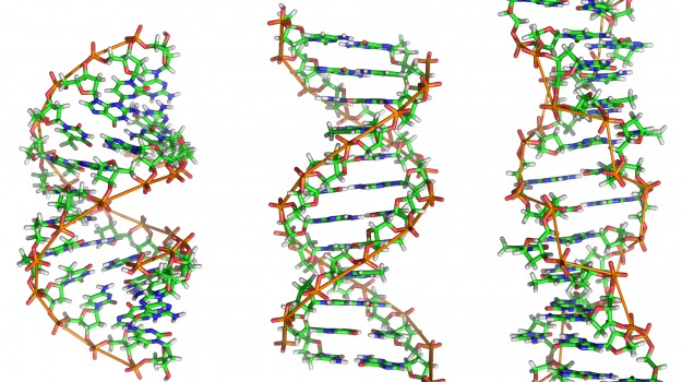 DNA, microrganismi, ricerca, specie, Sicilia, Vita