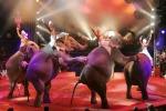 """Animali sequestrati al Circo Martin: """"E' una campagna persecutoria"""""""