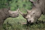 """L'allarme del WWF: """"In 40 anni sparita metà della fauna selvatica"""""""