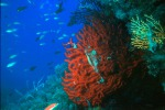 Il mar Mediterraneo invaso da mille specie aliene