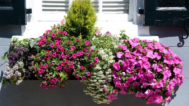 esposizione, fiera, fiori, produzione, vivaio, Andrea Olivero, Sicilia, Vita