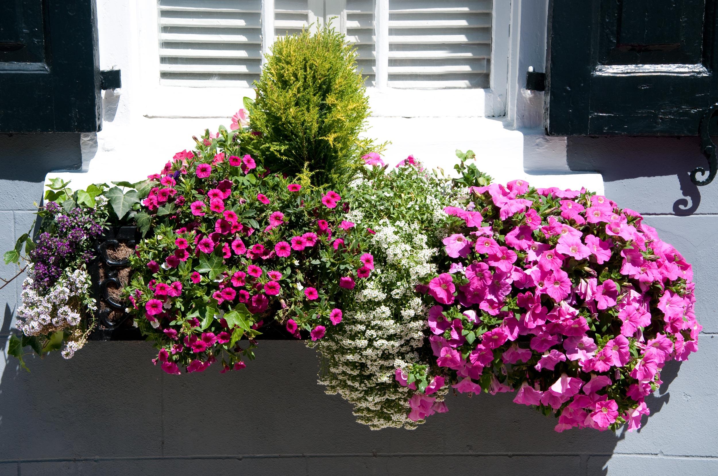 A Rimini due rassegne dedicate al mondo dei fiori e delle piante ...