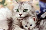 No all'estirpazione delle unghie ai gatti: parte la campagna anti declawing