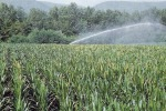 Invasi con poca acqua nell'Agrigentino, irrigazione a rischio