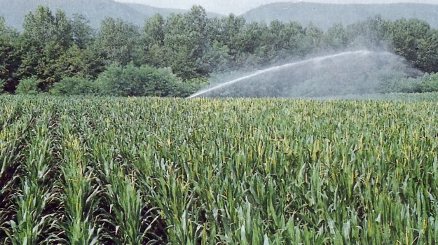AGRICOLTURA, consorzio di bonifica, irrigazione, Ragusa, Economia