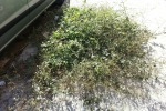 Serradifalco, erbacce e «veleni» nella periferia