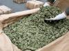 Aveva 5 chili di marijuana, arrestato un uomo a Gravina