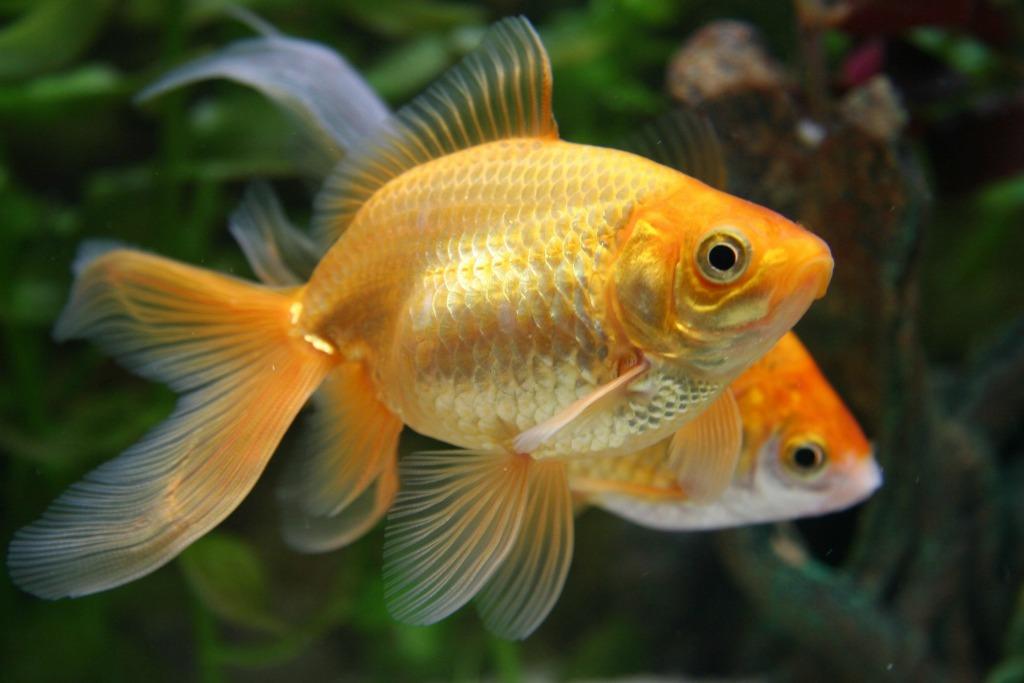 Simulato il campo visivo ecco come vedono i pesci for Immagini di pesci disegnati