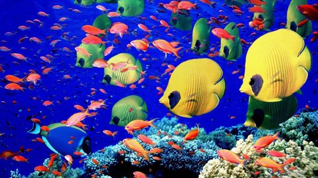 curiosità, medico, ospedale, pesci, scoperta, vista, Sicilia, Vita