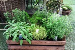 Cresce il settore delle piante officinali: coinvolte circa 3 mila aziende