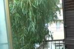 Verde a rischio e l'albero diventa «pendente»