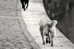 Abbandoni estivi senza tregua, 22mila animali portati nei canili