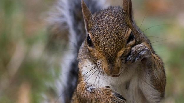 animali, animalisti, protesta, scoiattolo, Sicilia, Vita