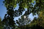 Palermo, alberi da potare e disagi per l'illuminazione in molti quartieri