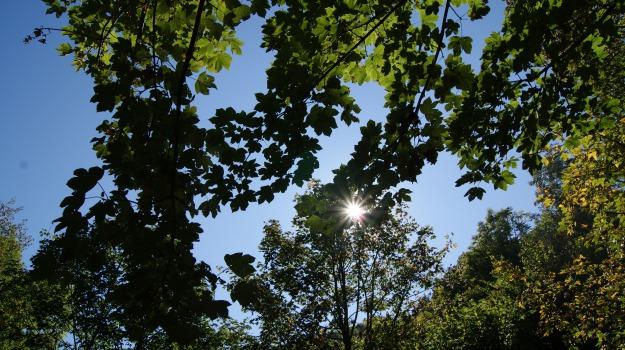 alberi, ambiente, comune, potature, verde, Palermo, Cronaca