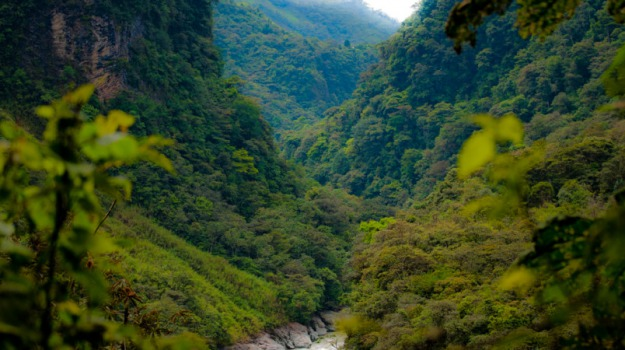 foresta amazzonica, Sicilia, Mondo