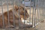 Animali maltrattati in Sardegna, tutti trasferiti in Toscana